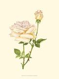 Victorian Rose IV