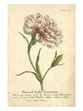 Non-Embellished Vintage Carnation