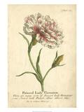 Non-Embellished Vintage Carnation