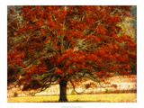Autumn Oak I