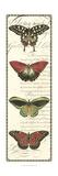 Butterfly Prose Panel I