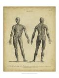 Anatomy Study IV
