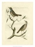 Nozeman Birds II