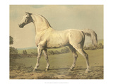 Cassell&#39;s Thoroughbred II