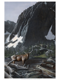 Mountainside Elk I