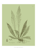 Fresh Ferns I