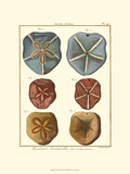 Sand Dollars I