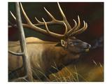 Elk Portrait II