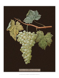 Brookshaw White Grapes