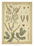 Diderot Antique Ferns II