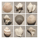 Weathered Shell Sampler