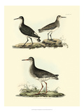 Selby Sandpipers II