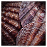 Macro Shells V