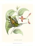 Hummingbird and Bloom III
