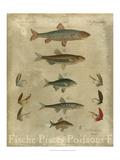 Pisces Composition I Reproduction d'art
