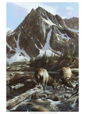 Mountainside Elk II