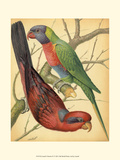 Cassell&#39;s Parrots IV