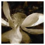 Bronze Lily VI