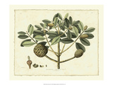 Delicate Botanical IV