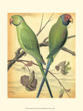 Cassell&#39;s Parrots III