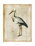 Antiquarian Birds II