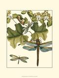 Dragonfly Medley II