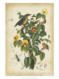 Antique Bird in Nature III