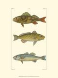 Freshwater Fish I