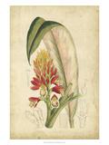 Curtis Tropical Blooms II