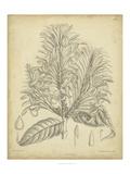 Vintage Curtis Botanical V