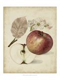 Harvest Apples II