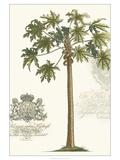 Non-embellished Palm Fresco IV