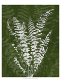 Jewel Ferns I