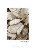 Garden Textures II