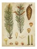 Vintage Conifers IV
