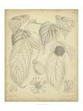 Vintage Curtis Botanical III