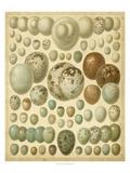 Vintage Bird Eggs I