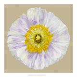 Poppy Blossom IV