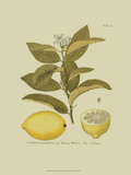 Antique Lemon