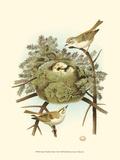 Prairie Warbler & Nest