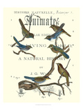 Non Embellish Vintage Ornithology II