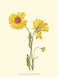 Delicate Wildflowers II