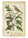 Antique Bird in Nature IV