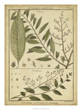 Diderot Antique Ferns I
