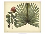 Antique Brazilian Palm