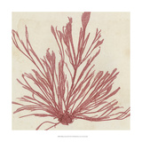 Brilliant Seaweed IX