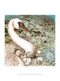 Swan Splash II