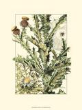 Wildflower Field IV Reproduction d'art