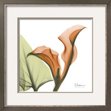 A Gift of Calla Lilies in Orange
