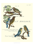 Non Embellish Vintage Ornithology I